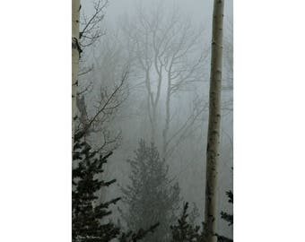 "Photograph of a ""foggy"" forest in the San Francisco Peaks of northern Arizona, printed on metal and ready to hang"