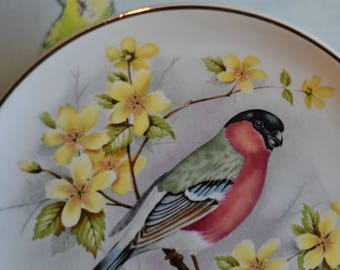 Vintage Bullfinch Bird Tea Plate ~ Yellow Tree Blossom ~ Prinknash Pottery ~ Gloucester ~ Wall Art ~ Cake Plate ~ Side Plate