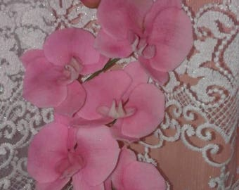 Branch of sugar orchids