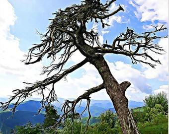 Tree, Blue Ridge Parkway