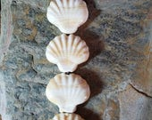 50% Off Set of 4 ivory sea shell glass lampwork beads Item #2119