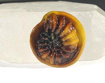 Jacqueline Parkes Raku Lampwork Ammonite Cabachon SRA Lampwork