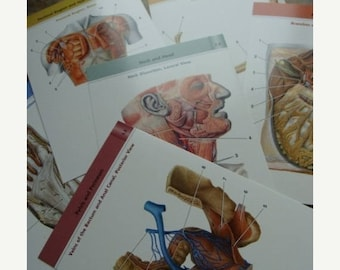 ONSALE Medical  Anatomical Body Parts Flash Cards