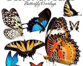 Designer Gems Overlays - BUTTERFLY OVERLAYS - (8) Photoshop .png files - Digital Overlays For Your Photos and Quick Pages.