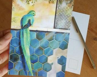 Paradise bird postcard set of 3
