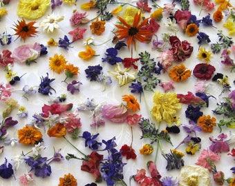 Dry Flower Confetti, Flower Girl, Wedding Confetti, Table Decorations, Lavender, Petals, Aisle Decor, Craft Supplies, Daisy, 75 Boxes