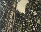 Woodblock Print - Forest No. 10  V. II Moku Hanga Limited Edition Hand Pulled Fine Art Block Print