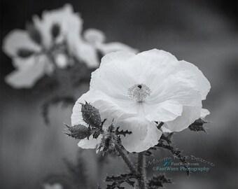 poppy, flower, gift for mom, gift for women, Poppy flower, black and white, white bedroom art, large wall art, white girls room, photo