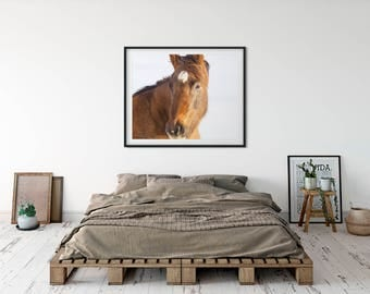 Chestnut Horse Print, Physical Photographic Print, Horse Photography in Color