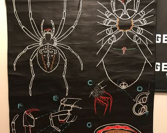Dr. Auzoux SPIDER classroom pull down chart chalk board anatomy RARE 1950s French