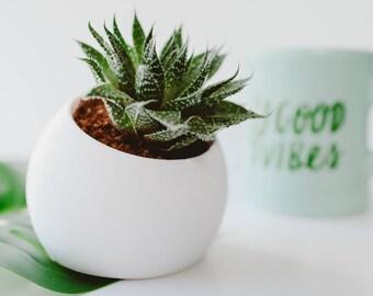 SUCCULENT PLANTER    Cactus Planter - Indoor Planter Pot - Desk Plant - White Planter - Air Plant - Cactus Pot - Modern Planter - Plant Pot