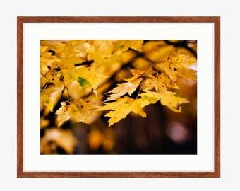 New Framed prints!  Framed Art, Print, Coastal, Beach Print, Home Decor, Floral Photo, Cityscape Art, Framed Fine Art Print