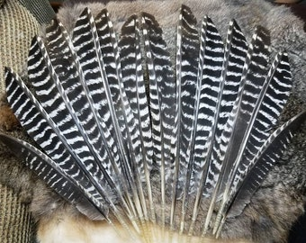 Turkey Wing Feathers - Pointed Striped  - Lot of 14