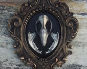 Real Opossum Skull And Jaws Mounted in Vintage Frame