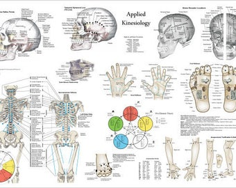 "Applied Kinesiology Poster Chiropractic 24"" X 36"""