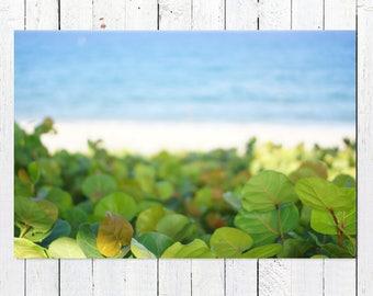 Greenery Tropical Leaf Print | Large Minimalist Beach Scene Art Print | Beach Photography Prints | Modern Blue Ocean Wall Art Seascape Decor