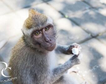 "11x17, Digital Print, ""Balinese Monkey"""