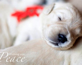 Christmas Baby, Set of Golden Retriever Puppy Holiday Photo Cards