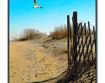 Seagulls and Sand Dunes, Seagull,Sand dunes,Outer Banks,North Carolina, Ocean, Fences,Peaceful,Calm, Relaxing,Nature,Travel,Impressionistic