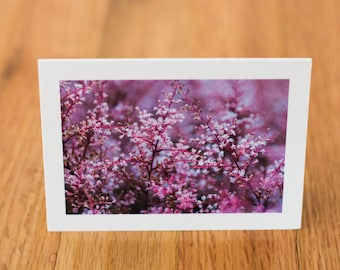 Pink Flowers in Canada, Travel Photo Card with envelope, Blank Inside