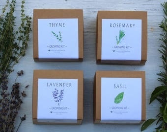Herb garden gift boxes, 4 Basil, Thyme, Rosemary, Lavender, Indoor herb gift set, hostess gift, housewarming gift, gift for foodie