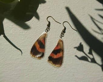Underwing Moth wing earrings.