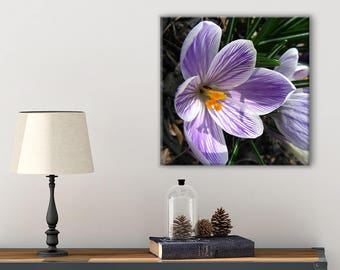 Bedroom Art Canvas - Bathroom Canvas Art - Nature Print - Spring Photography Print - Crocus - Nature Photography Canvas - Cottage Chic