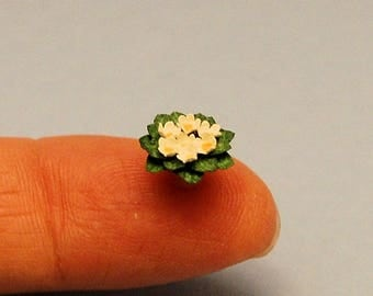 1/2 inch scale miniature-African Violet