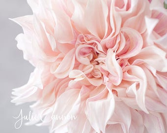 Photography Print - Pink Dahlia Floral Print -  art for your home