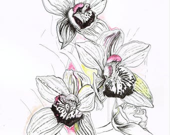 ORIGINAL ARTWORK - Oxford University Botanical Gardens Illustration - Cymbidium Highland Hill - Flower Floral Painting/Drawing (Pen & Ink)