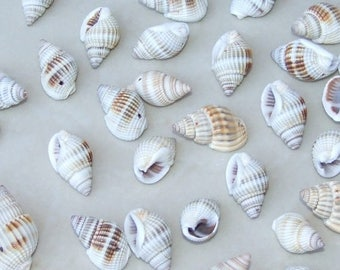 Natural Spiral Sea Shell - Spiral Shell Bead  -  Seashell - 15mm - 30mm  - 25 Shells - 007-70