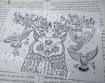coloring postcard coloring OWL OWL