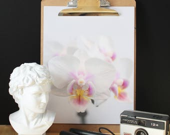 Orchid photo, flower poster, Scandinavian poster, inspiration poster, minimalist poster, color photography, modern poster
