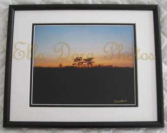 Trees at Sunset - Framed Nature Picture Photograph Photo