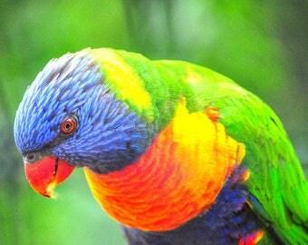 Laminated placemat Parrot
