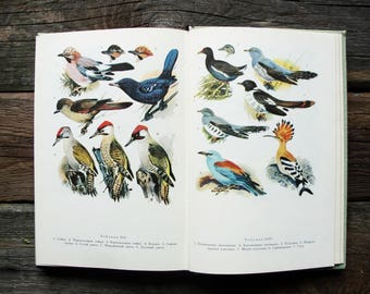 Birds - 48 Colour Plates + 31 b/w Plates - Hardcover -- Vintage Ornithological Book, 1981. Zoology Nature Drawings Illustrations Art Print