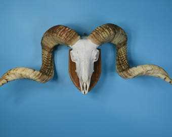 Ram skull,goat skull,sheep skull hanging wall without the lower-jaw, art work 5-8#  free shipping to worldwide