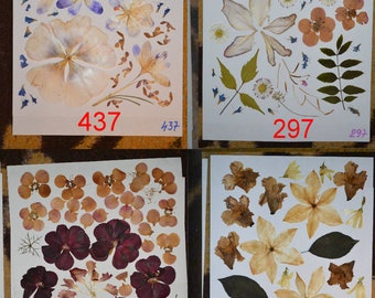 Real pressed leaves and flowers #437 #297 #410 #291