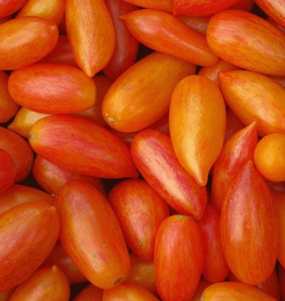 Blush Tomato