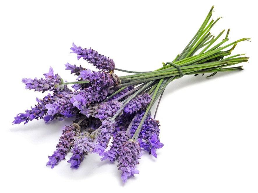 Lavende Essentie Oil