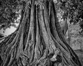 Man in Banyan Tree black and white tree roots