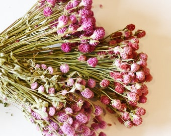 Globe Amaranth, Gomphrena, Dry Flowers, Dried, Red, Fuchsia Pink, Rose Pink, Dry Flowers, Floral, Wedding, Wildflowers Floral Arrangements