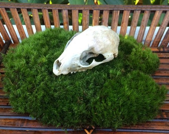 Moss, Rock Cap Moss, Terrariums, Crafts, Miniatures, Fairy Gardens, Wedding Decor, Moss Mat, Shade Garden, Vivariums, Wreaths, Bonsai