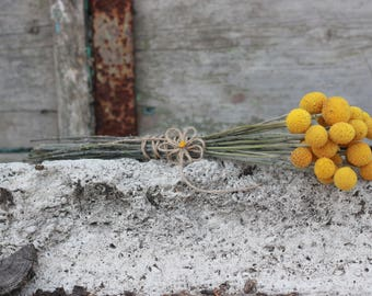 x10-100, Dried Craspedia flowers, dried billy buttons, dried yellow ball, dried flower arrangement, wedding bouquet, craspedia flowers
