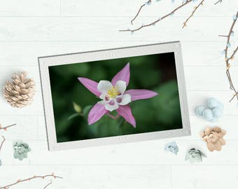 Photography cards, Flower Photography, Blank Note Cards, Photography Note Cards, Greeting Cards blank,  Columbine Flower, Blank cards