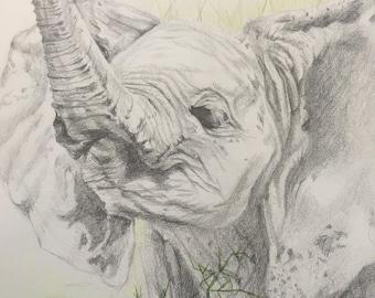 Baby Elephant - ORIGINAL Pencil Drawing - Nursery Art, Nursery Decor, Animal Art, Baby Animals, Gift, Original Artwork, Wall Art, Home Decor