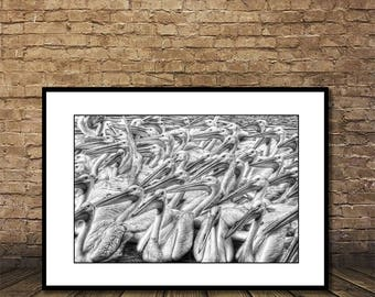 Pelicans Print,Instant Download,Poster Design,Wall Decor,                Printable Art,Black and White, Photography,Digital Print