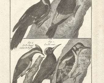 1790 Antique ORIGINAL Print, 227 Years Old Engraving, WOODPECKERS, Ornithology