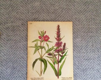 Genuine vintage framed botanical drawing, flower illustrations, print, floral, glass frame, double sided red flowers