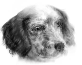 pet portrait custom, custom portrait, custom dog painting, pet portrait, pet memorial, pet art, dog painting, dog, pet, custom pet portrait